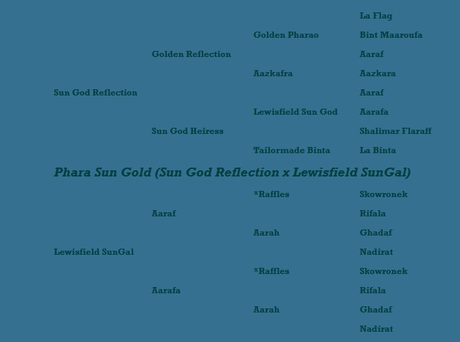 Phara Sun Gold pedigree