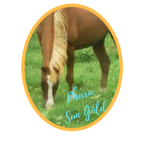 Phara Sun Gold (Sungod Reflection x Lewisfield Sungal) 1979-2010 Chestnut Mare