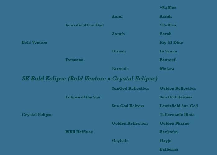 SK Bold Eclipse Pedigree