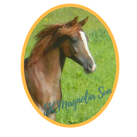 SK Magnolia Sun (Burgundy Sun x Kyobi Rihma) 2015 Chestnut Filly bred and owned by Sunh Kyst Arabians