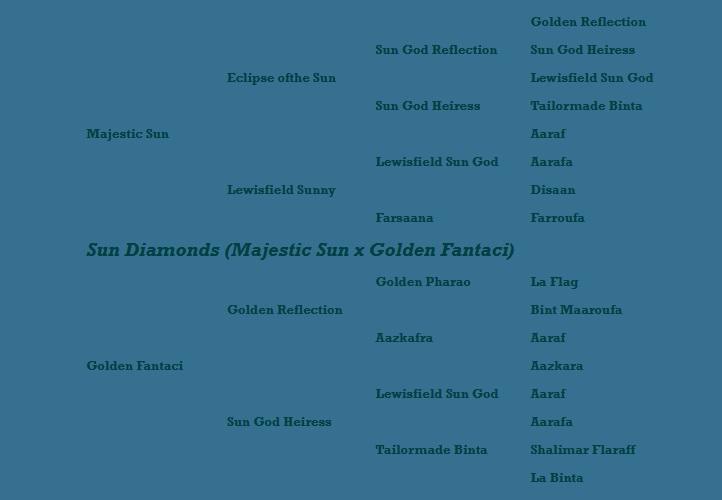 Sun Diamonds pedigree