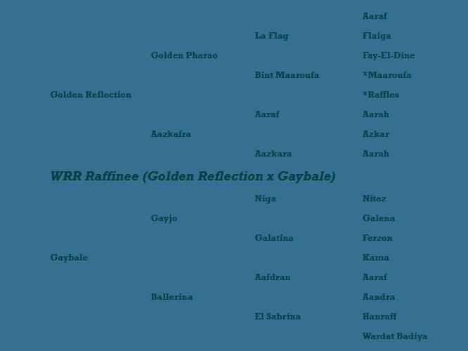 WRR Raffinee pedigree