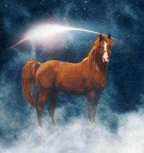 SK Bold Eclipse (Bold Ventore x Crystal Eclipse) Crabbet Arabian Stallion