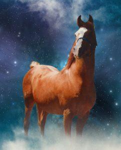 Bold Ventore (Lewisfield Sun God x Farsaana) Crabbet Arabian Stallion